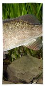 Smallmouth Bass Micropterus Dolomieu Bath Towel