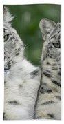 Snow Leopard Pair Sitting Bath Towel