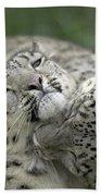 Snow Leopards Playing Bath Towel