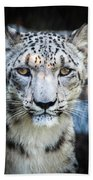 Snow Leopards Stare Hand Towel