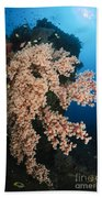 Soft Coral On The Liberty Wreck, Bali Bath Towel