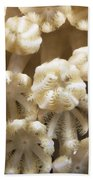 Soft Coral Polyps Feeding, Papua New Bath Towel