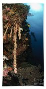 Soft Coral Reef, Indonesia Bath Towel