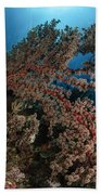 Soft Coral Reef Seascape, Indonesia Bath Towel