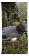 Sooty Albatross Phoebetria Fusca Bath Towel