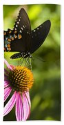 Spicebush Swallowtail Butterfly And Coneflower Bath Towel