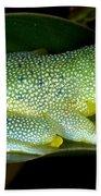 Spiny Glass Frog Bath Towel