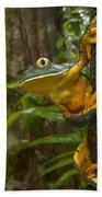 Splendid Leaf Frog  Costa Rica Bath Towel