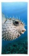 Spotted Porcupinefish Bath Towel