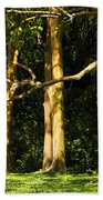 Stand Of Rainbow Eucalyptus Trees Bath Towel