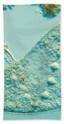Stentor Coeruleus Bath Towel