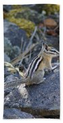 Straight Tailed Chipmunk On A Rock Bath Towel