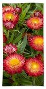 Strawflower Helichrysum Sp Red Variety Bath Towel