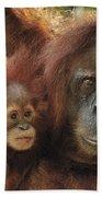 Sumatran Orangutan Pongo Abelii Mother Hand Towel