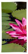 Sweet Pink Water Lily In The River Bath Towel