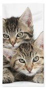 Tabby Kittens Cuddling Bath Towel