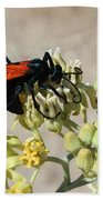 Tarantula Hawk Wasp Bath Towel