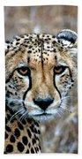 The Cheetah Stare Bath Towel
