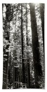 The Forest Through The Trees Bath Towel