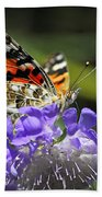 The Painted Lady Butterfly  Bath Towel