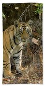Tiger Panthera Tigris Six Month Old Bath Towel