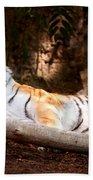 Tigress And Cubs Bath Towel