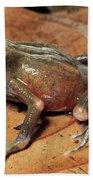 Toad Atelopus Senex On A Leaf Hand Towel