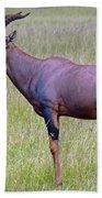Topi Antelope Bath Towel