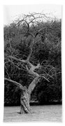 Tree Dancer Bath Towel