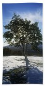 Tree On A Snow Covered Landscape Bath Towel