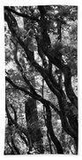 Trees Beautiful Trees Bath Towel
