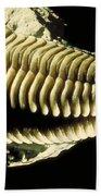 Trilobite Fossil Bath Towel