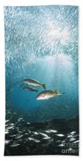 Trio Of Snappers Hunting For Bait Fish Bath Towel