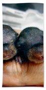 Twin Baby Squirrels Bath Towel