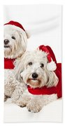 Two Cute Dogs In Santa Outfits Hand Towel