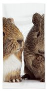 Two Young Guinea Pigs Bath Towel