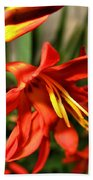 Vibrant Crocosmia Bath Towel