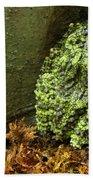 Vietnamese Mossy Frog Bath Towel