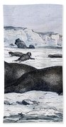Walruses On Ice Field Bath Towel