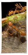 Weaver Ant Oecophylla Longinoda Group Bath Towel