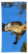 Wedge-tailed Eagle Bath Towel