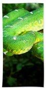 West Amazonian Emerald Tree Boa Bath Towel
