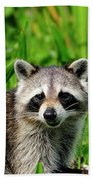 Wetlands Racoon Bandit Bath Towel