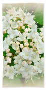 White And Cream Hydrangea Blossoms Bath Towel