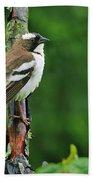 White-browed Sparrow-weaver Bath Towel