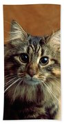 Wide-eyed Maine Coon Cat Bath Towel