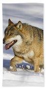 Wolf Canis Lupus Walking In Snow Bath Towel
