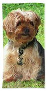 Yorkshire Terrier In Park Bath Towel
