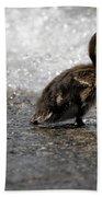 Young Duck On The Beach Bath Towel
