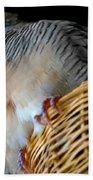 Zebra Dove From Above Bath Towel